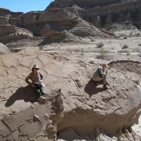 Relevamiento de huellas de mamíferos y aves en depósitos de canales anastomosados asociados a grandes grietas de desecación de la Fm. Toro Negro (Mioceno, Cuenca de Vinchina, La Rioja)