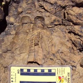 Cefalópodos endocéridos del Floiano de la Cordillera Oriental, Jujuy