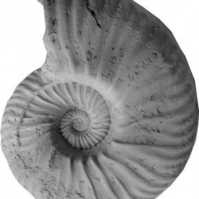 Pseudofavrella garatei, un amonoideo endémico valanginiano de la cuenca Neuquina