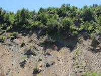 tectonica08