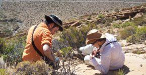 Identificación de trazas fósiles en depósitos del Cretácico de la Cuenca Neuquina