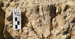 Corales escleractínidos coloniales en posición de vida en la Formación Picún Leufú, Neuquén