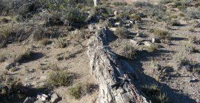 Tronco petrificado en la Formación Bajada Colorada, región de Picún Leufú