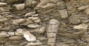 Bivalvos en posición de vida. Vista en corte transversal. Formación Agrio, Miembro Agua de la Mula, Hauteriviano Tardío. Localidad: Bajada del Agrio, Neuquén.