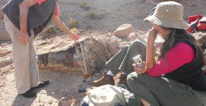 Restos de troncos en sedimentitas triásicas del área de Paramillos de Uspallata (Cuenca Cuyana, Mendoza)