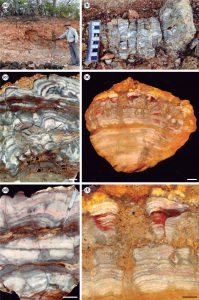 Estromatolitos de la Formación Pedra de Fogo.