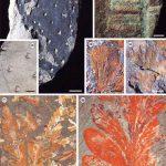 Reevaluación de los macrofósiles pérmicos de la cuenca de Parnaíba: implicaciones bioestratigráficas, paleoambientales y paleogeográficas.