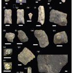 Nuevo hallazgo de elementos de equinoideos regulares y microfósiles del Miembro Pilmatué, Formación Agrio (Cretácico temprano), Cuenca Neuquina