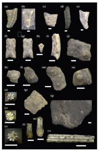 Elementos de equinoideos en el Miembro Pilmatué de la Formación Agrio.