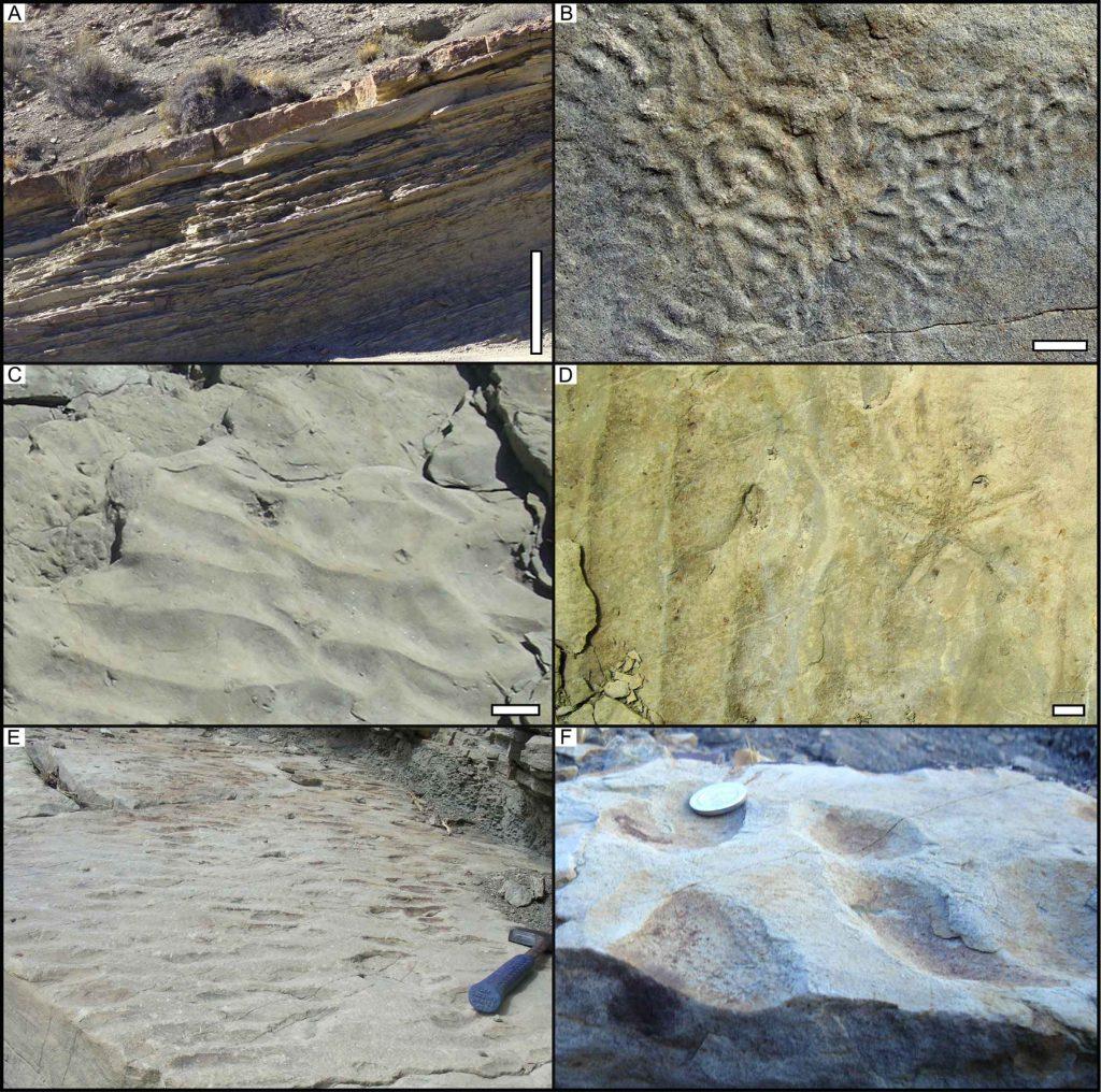 Ejemplos de rasgos sedimentarios en la sección estudiada.