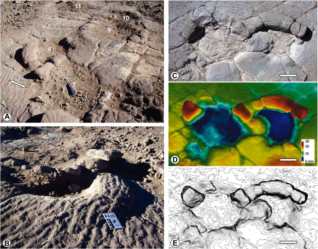 Las huellas de saurópodos de Aguada de Tuco, Cuenca Neuquina.