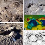 Hallazgo de nuevas huellas angostas de saurópodos de la Formación Candeleros de edad cenomaniana en el norte de la Patagonia