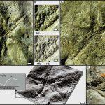 Hallazgo de trazas fósiles de asteroideos del Cretácico Inferior en depósitos marinos marginales de la Patagonia