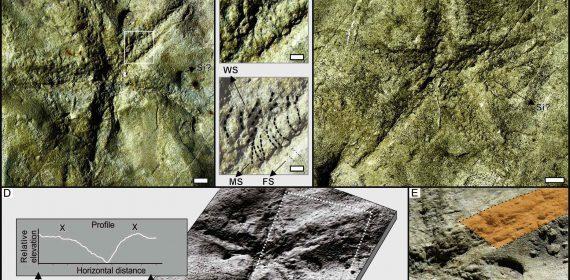 Fotografías de campo de los Asteriacites y análisis de las imágenes utilizadas para su descripción.