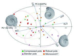 Resultado del Análisis de Componentes Principales (PCA) de la variables de ornamentación y conchilla de Lytohoplites burckhardti