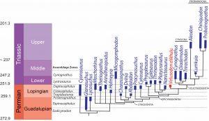 Cladograma calibrado mostrando la ubicación de Vetusodon