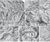 Nuevos invertebrados de la Formación Huitrín indican fuerte estrés ambiental