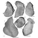 Revisión de las ostras berriasianas-valanginianas de las formaciones Vaca Muerta y Mulichinco, sur de Mendoza, Argentina