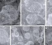 Nuevos registros de corales para la Formación Agrio: revisión de la Familia Actinastraeidae