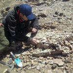 Tesis Doctoral de Tomás Pedernera sobre tafonomía de paleofloras triásicas del centro-oeste de Argentina