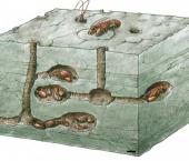 Estudio tafonómico y paleobiológico de decápodos fosoriales de la Formación Agrio (Cretácico Inferior, Cuenca Neuquina)