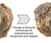 Viviendo bajo una sombrilla: incrustantes en corales escleractínidos de fondo blando, Formación Agrio, Cretácico Inferior de la Cuenca Neuquina