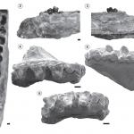 """Nuevo estudio sobre """"Pachybiotherium illuminatum"""" un marsupial del Mioceno de Patagonia"""