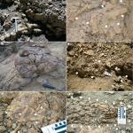 Nuevos registros de corales para la Formación Agrio: revisión de la Familia Columastraeidae