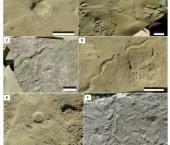 Estudio integral de un paleolago triásico de Mendoza