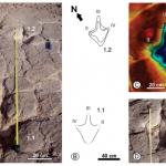 Huellas de dinosaurios: variabilidad controlada por el tipo de sustrato